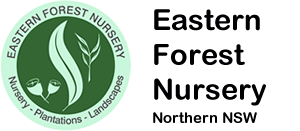 Eastern Forest Nursery logo